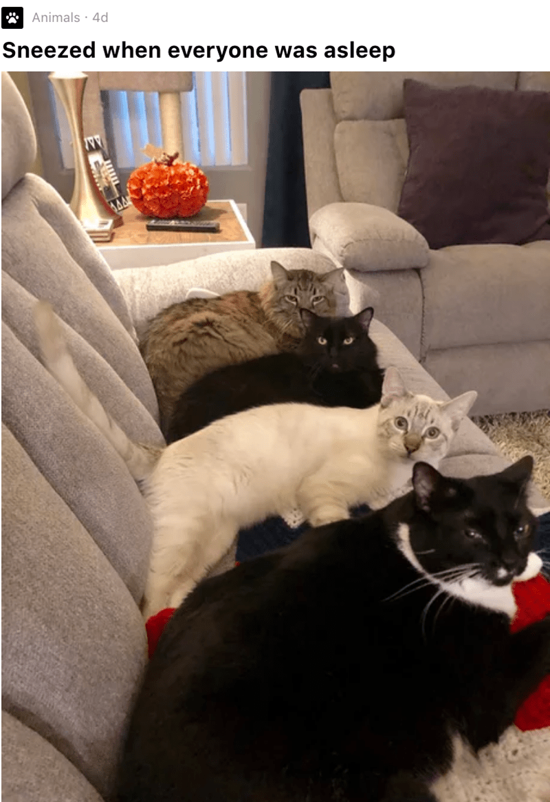 Cat - Animals - 4d Sneezed when everyone was asleep