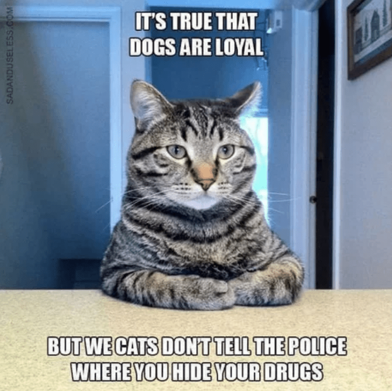 Cat - IT'S TRUE THAT DOGS ARE LOYAL BUT WE CATS DONT TELL THE POLICE WHERE YOU HIDE YOUR DRUGS SADANDUSELESS.COM