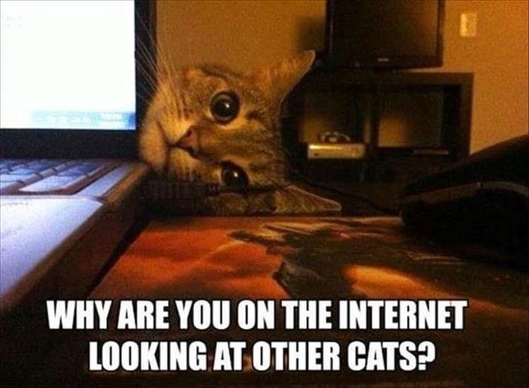 Cat - WHY ARE YOU ON THE INTERNET LOOKING AT OTHER CATS?