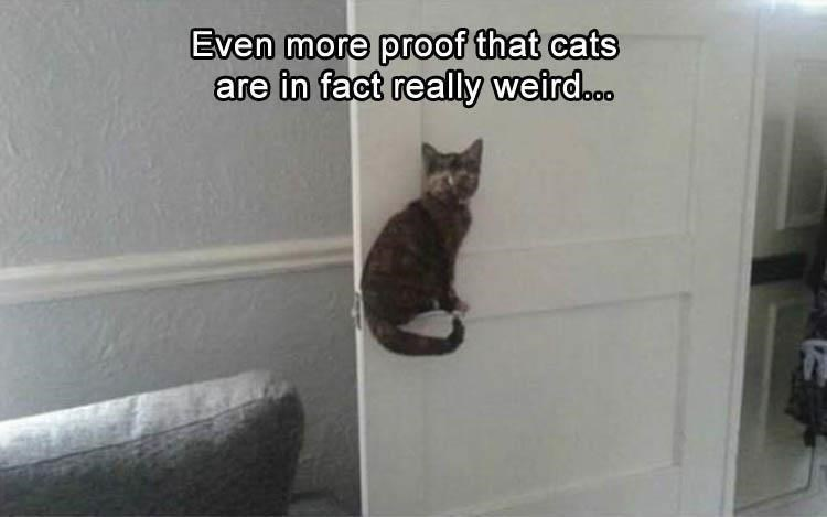 Cat - Even more proof that cats are in fact really weird..