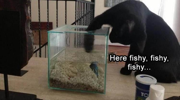 Cage - Here fishy, fishy, fishy... TO