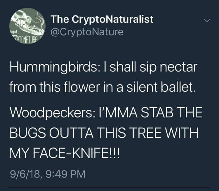 post about the differences between a hummingbird and a woodpecker when they get food