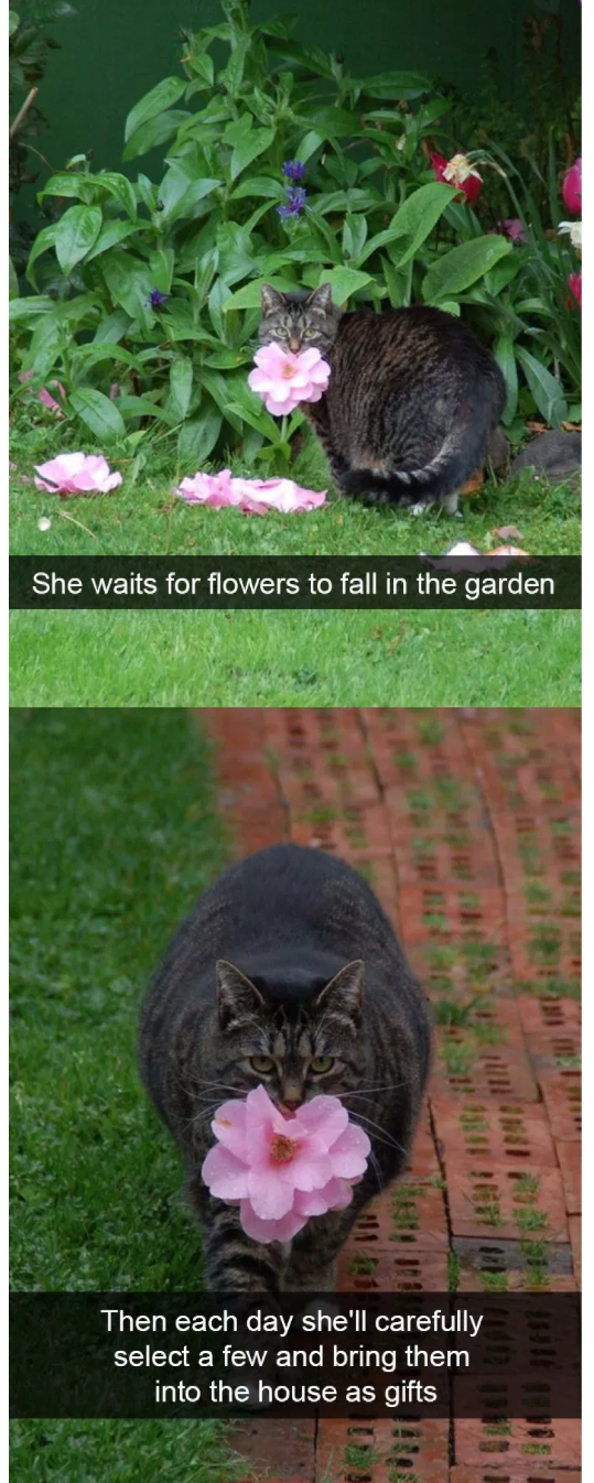cat meme of a cat who brings fresh flowers into the house