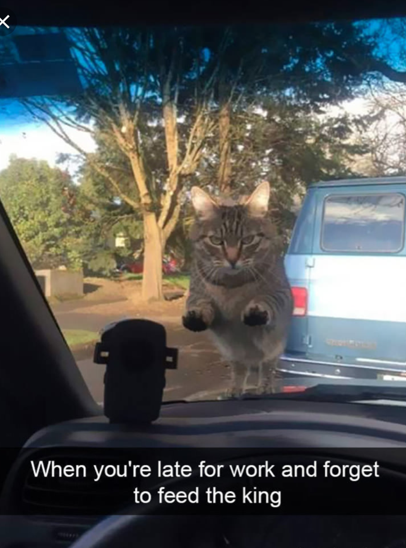 cat meme of a cat who stares into the windshield of a car with a menacing look