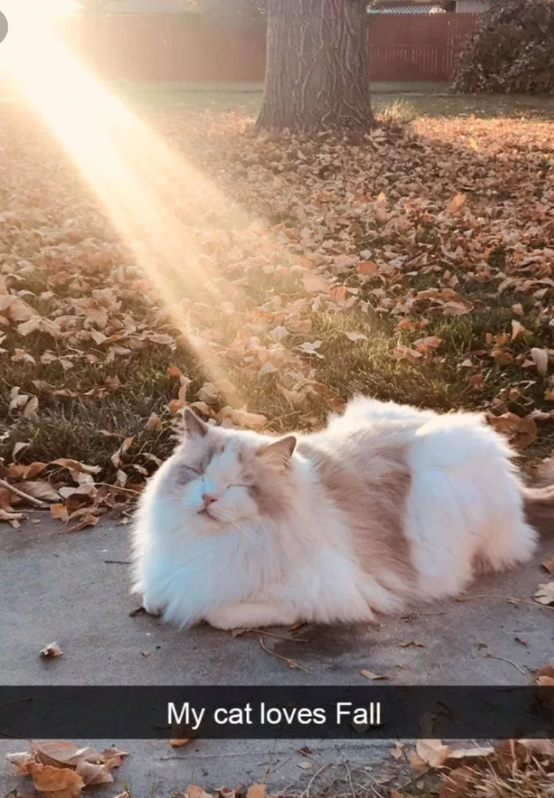 cat meme of a cat sitting outside in the sun