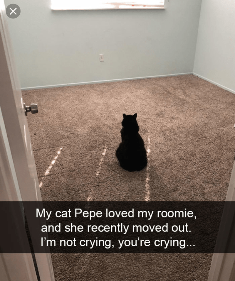 cat meme of a cat who is sad a roommate has moved out and stares into an empty room
