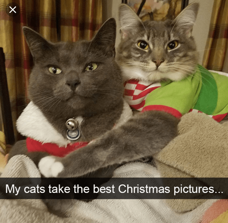 cat meme of 2 cats hugging each other in Christmas attire
