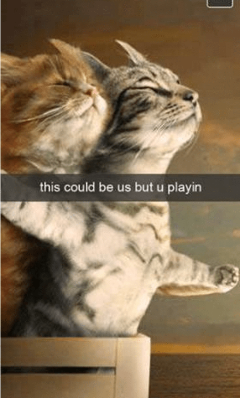 cat meme of two cats posing in the titanic pose