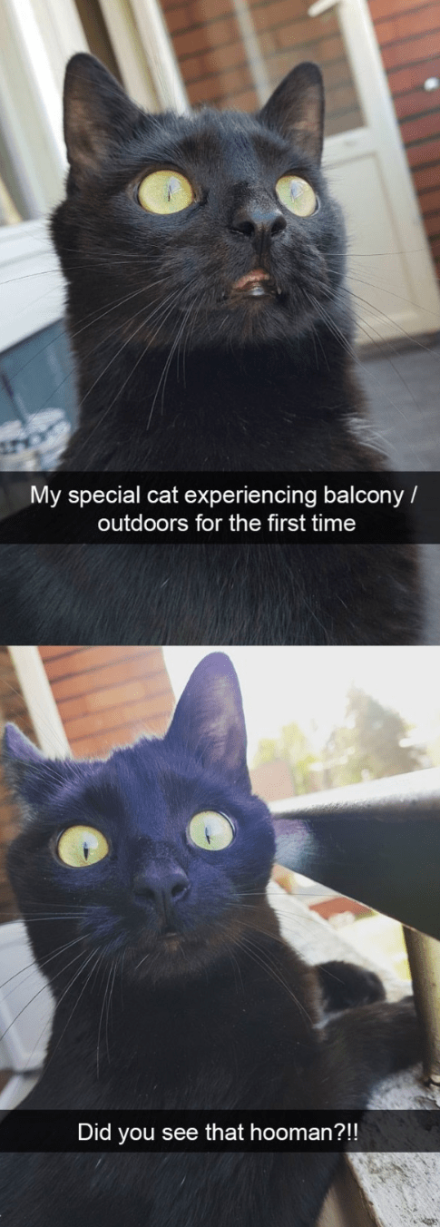 cat meme being outdoors for the first time