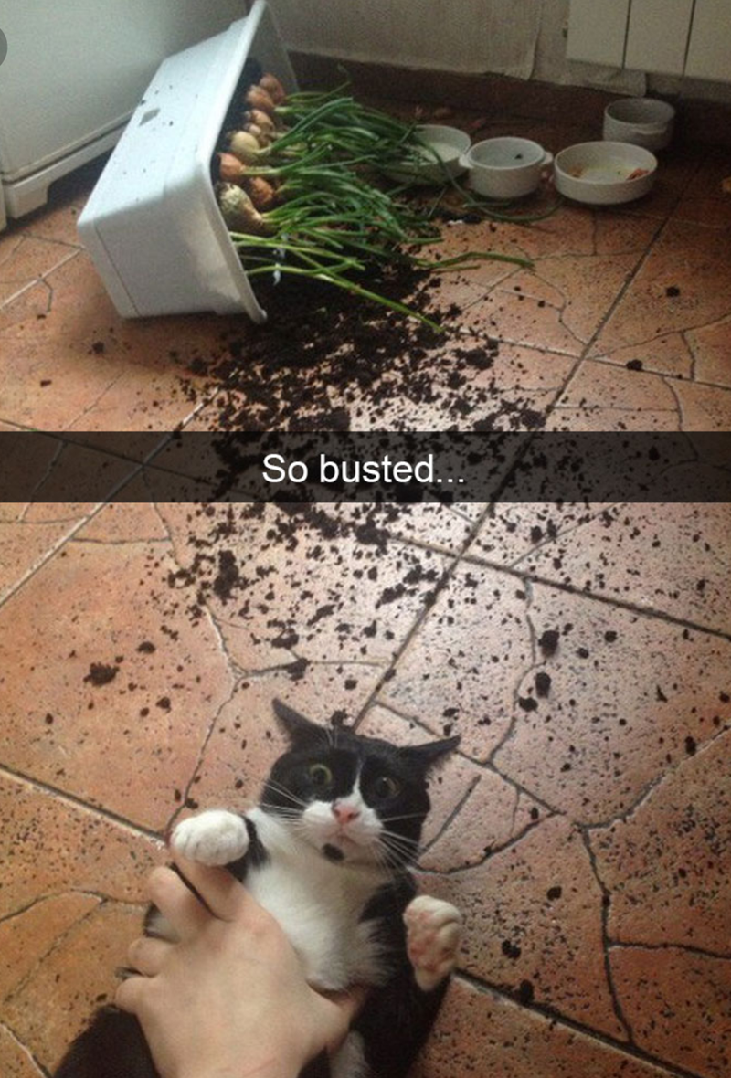 cat meme of a cat who broke a potted plant