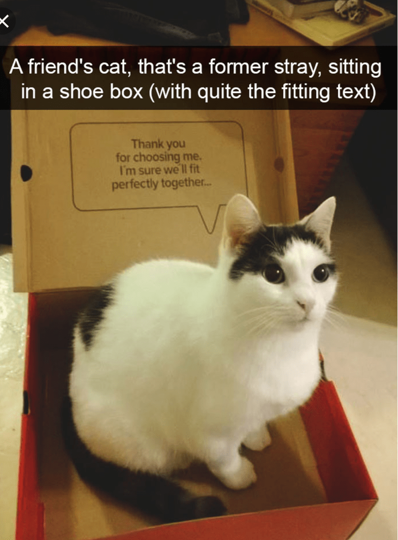 cat meme of a cat sitting in a shoe box