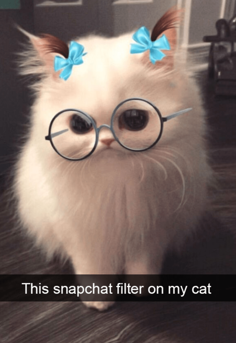 cat meme of a cat with a snapchat filter of glasses and bows on the ears