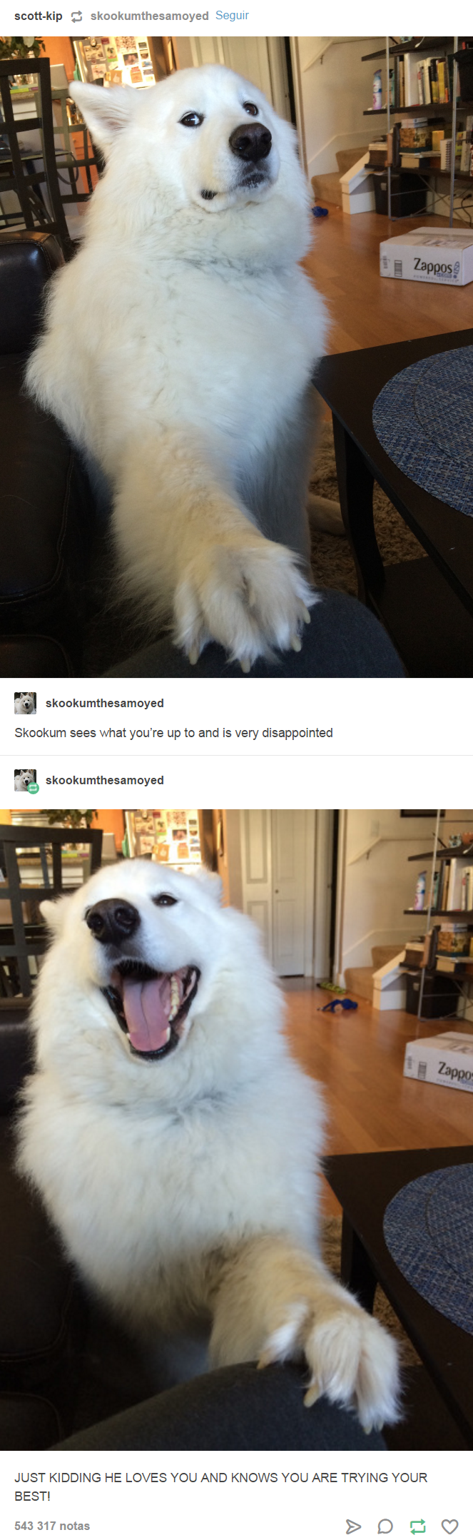"Pic of a suspicious-looking Samoyed with the caption, ""Skookum sees what you're up to and is very disappointed"" above a pic of him looking happy above a caption that reads, ""Just kidding, he loves you and knows that you are trying your best"""