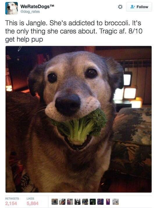pic of a dogs mouth stuffed with broccoli florets