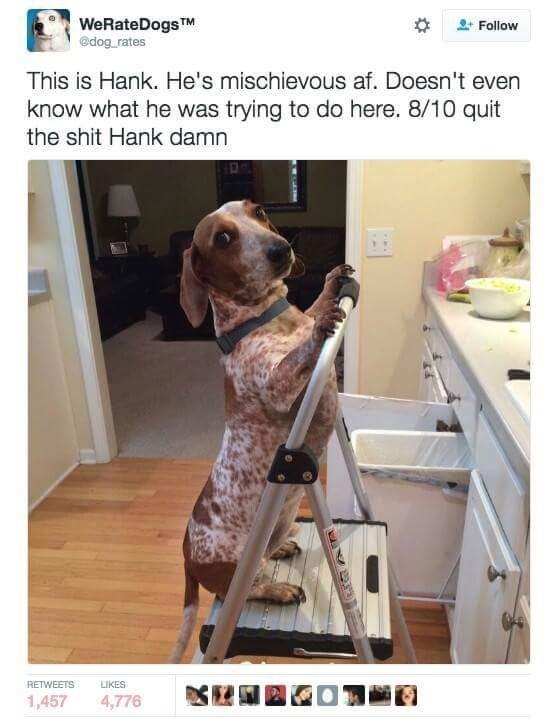 pic of a dog standing on a ladder in a bathroom
