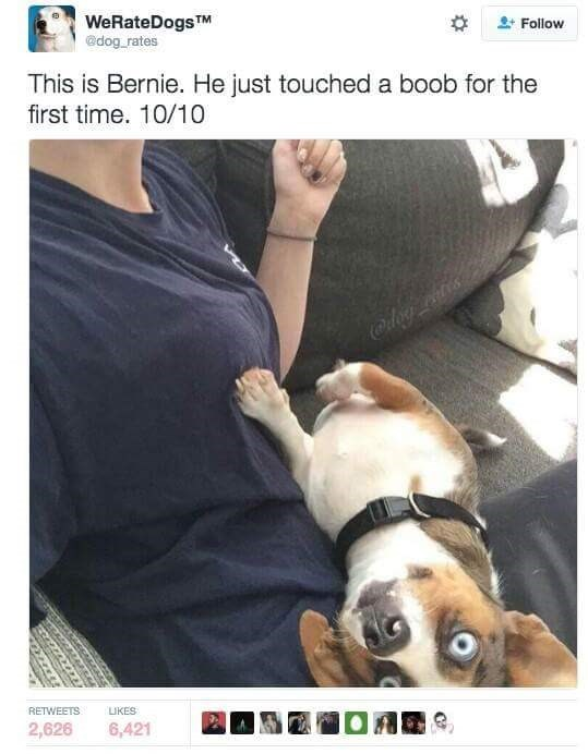 dog touching a boob for the first time