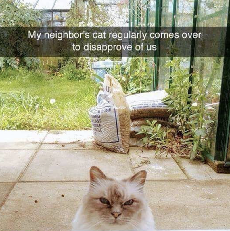 pic of a cat who gives his neighbors a nasty look