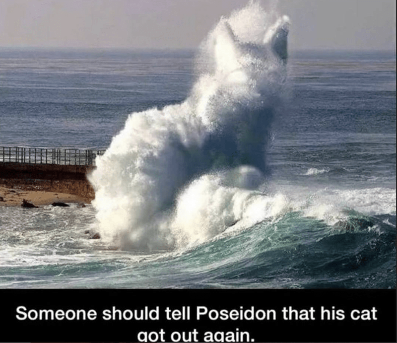 meme about the oceans waves that looks like a cat