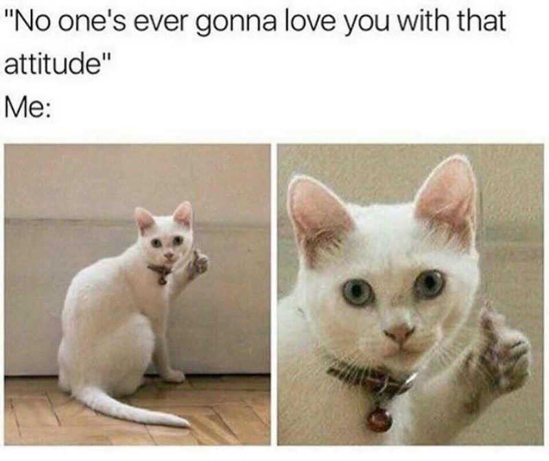 """Caption that reads, """"'No one's ever gonna love you with that attitude' Me ..."""" above pics of a cat with a photoshopped thumbs-up"""