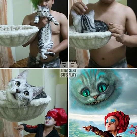 Cat - LOWCOST COSPLAY