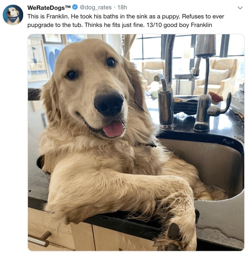 tweet post of a dog sitting inside a kitchen sink