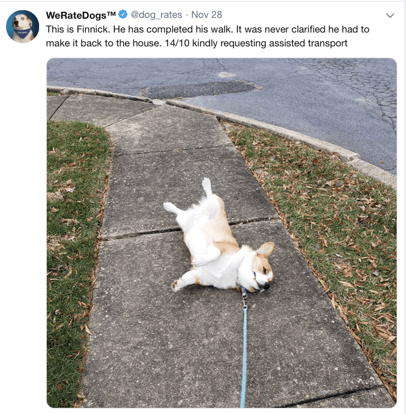 post of a dog laying on his side in the middle of a walk