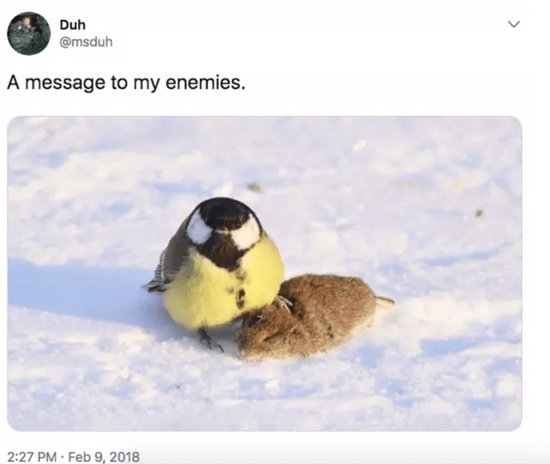 """Caption that reads, """"A message to my enemies"""" above a pic of a cute little bird on top of a mouse it killed"""