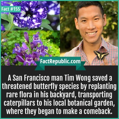 Flower - Fact #155 FactRepublic.com A San Francisco man Tim Wong saved a threatened butterfly species by replanting rare flora in his backyard, transporting caterpillars to his local botanical garden, where they began to make a comeback.