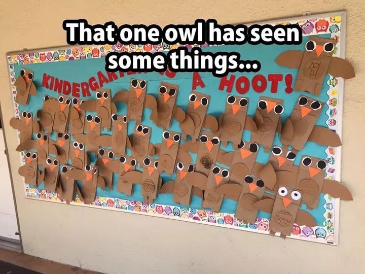 Pic of a wall covered in paper owls, one of them standing out for having small panicky eyes