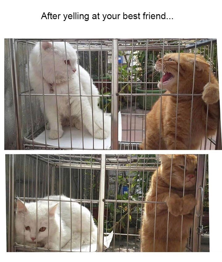 Meme about fighting with a friend with pic of two cats crowding into different corners of one cage