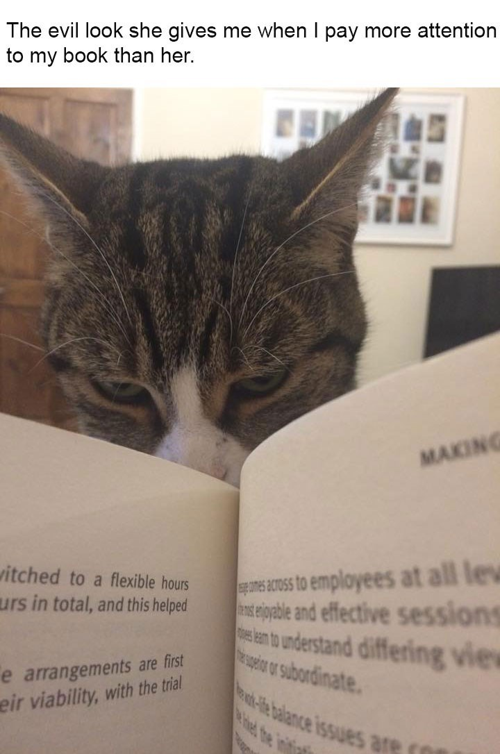 Pic of cat getting jealous when her human tried to read a book