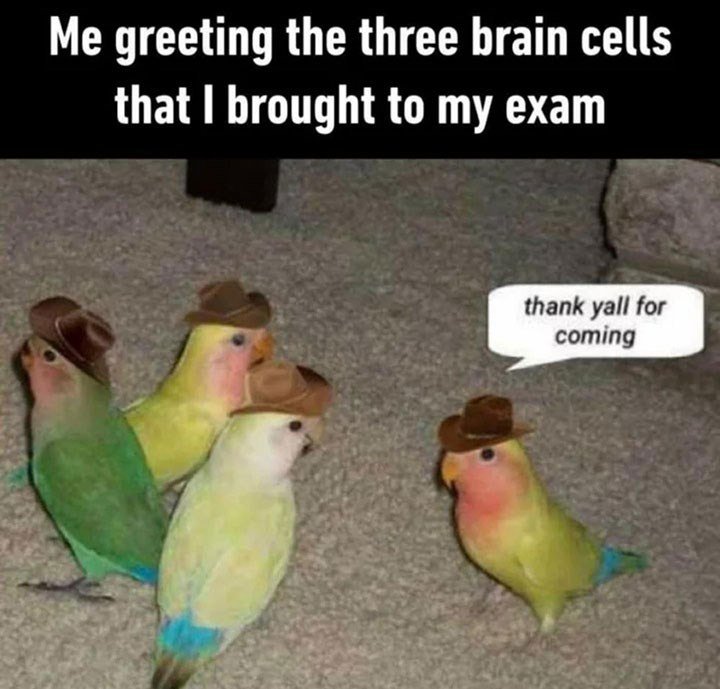 Meme about trying to focus in an exam with pic of a meetup of 4 parrots in cowboy hats