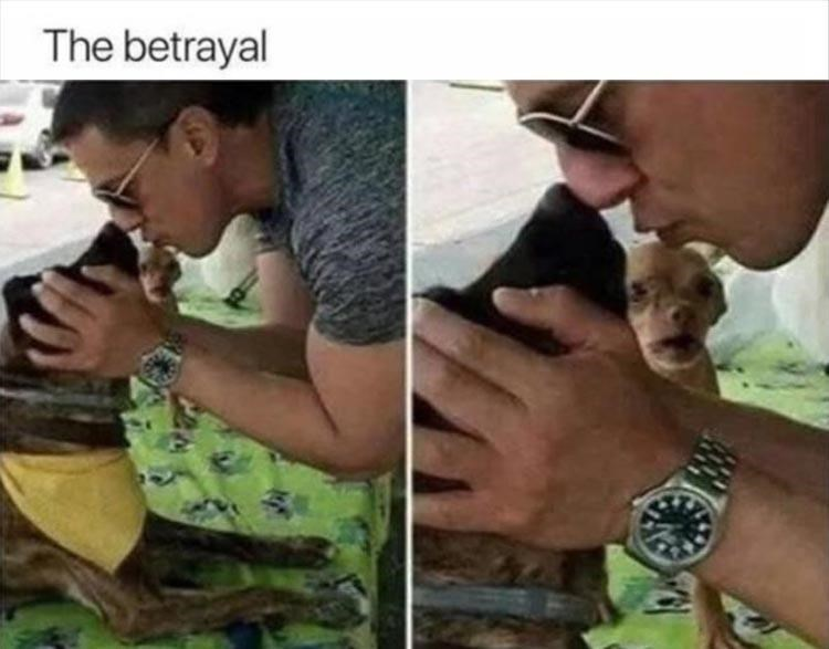 Pic of a shocked looking dog watching a person kissing another dog