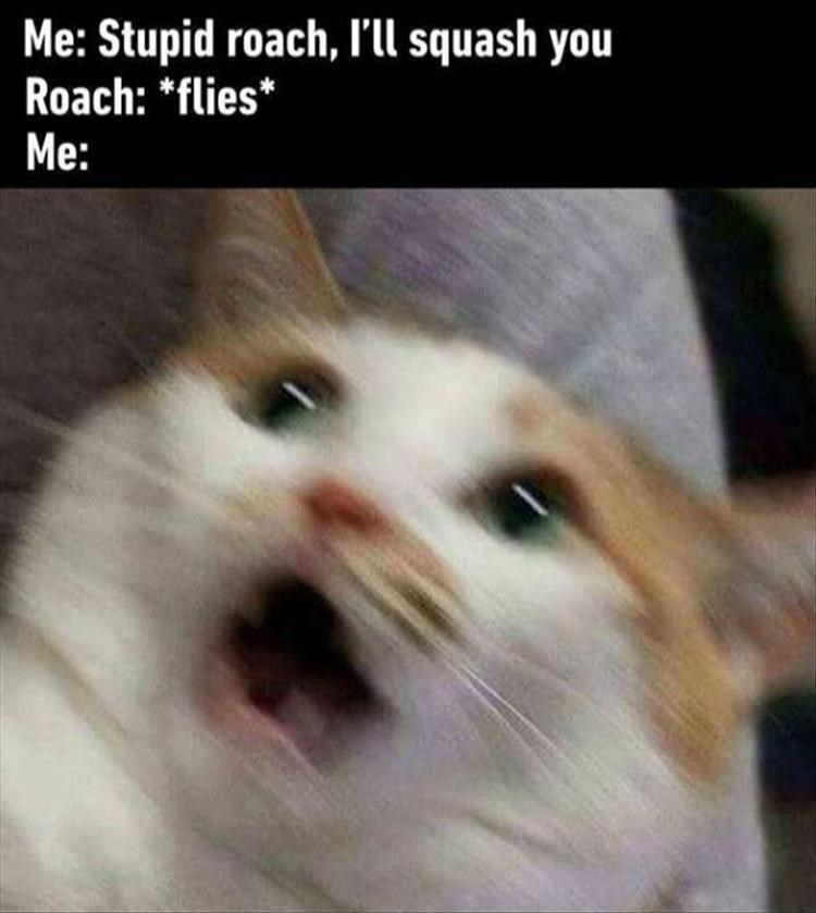 Meme about flying cockroaches with blurred pic of a panicked cat
