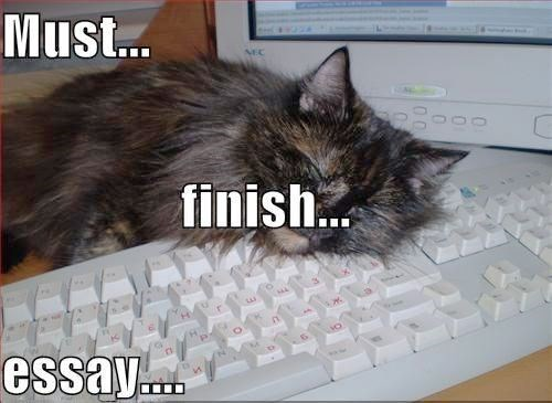 cat falling asleep on keyboard while writing paper