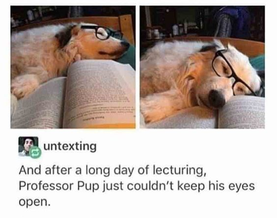 dog in glasses falling asleep over open book