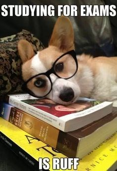 dog in glasses rests on top of stack of books after studying for exams