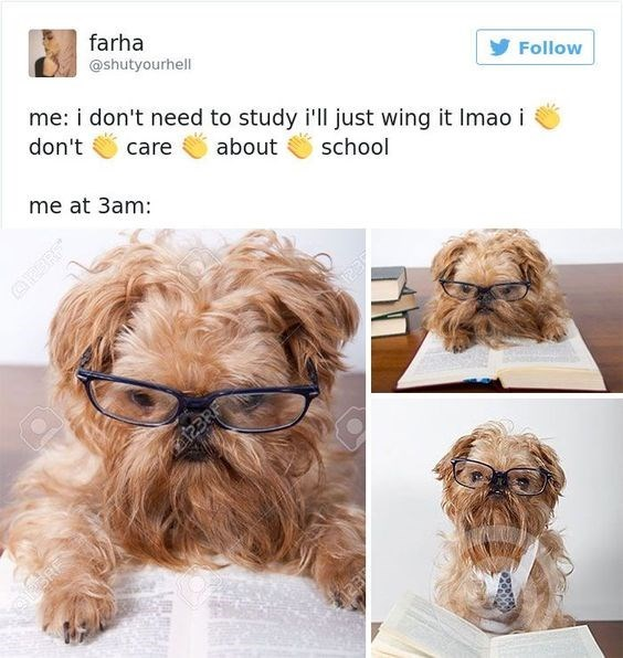 dog studying all night for exam despite claiming not to care about school