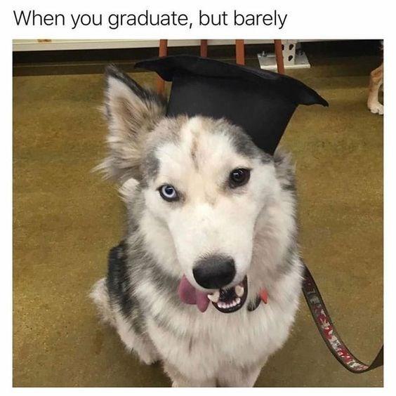 dog graduates with minimal grades