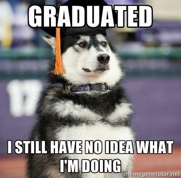 dog graduates without actually understanding anything