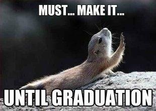 tired squirrel dragging itself toward graduation