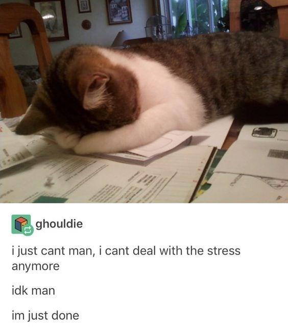cat having mental breakdown while studying