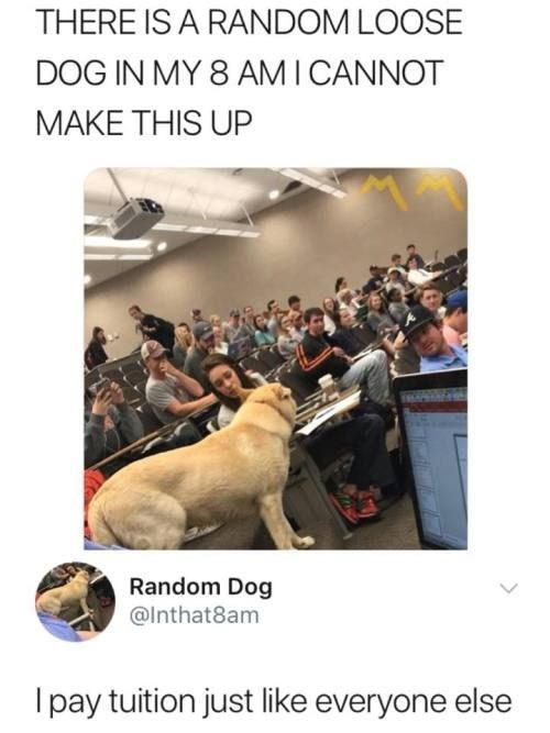 tweet joking about dog entering lecture hall actually being a student