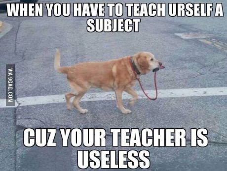 dog taking itself on a walk representing teaching yourself a subject
