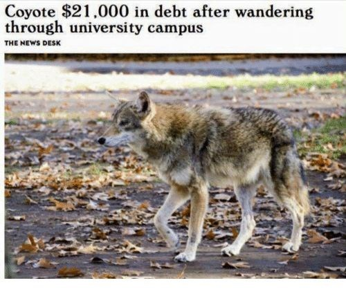 joke about coyote accidentally entering campus getting student loans