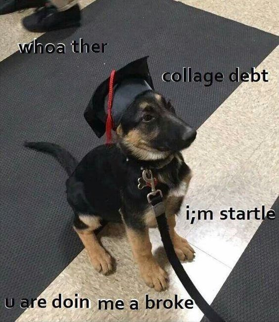 puppy who just graduated becomes frightened by college debt