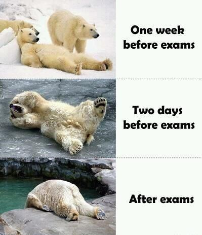 polar bears representing students' mental state during and after the exams period