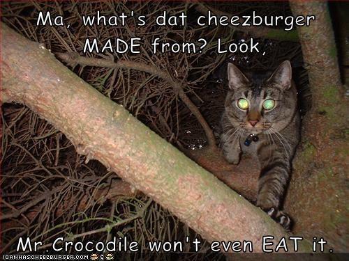 Cheezburger Image 9243545344