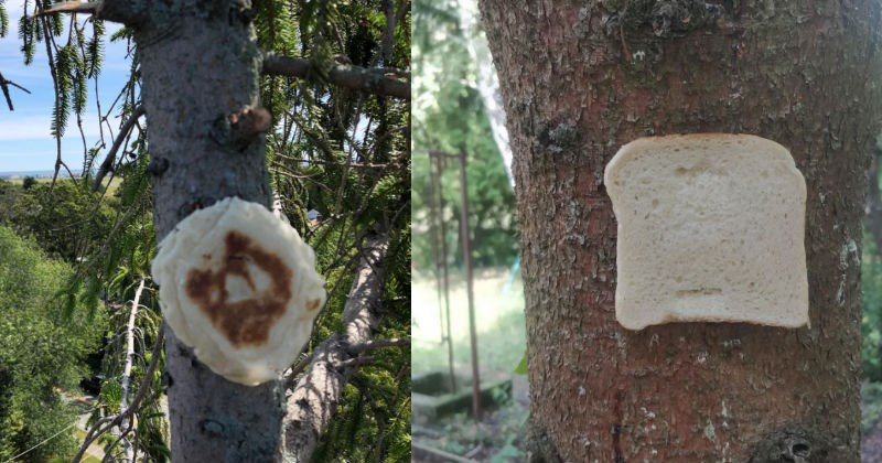 A collection of images showing bread being stapled to trees.