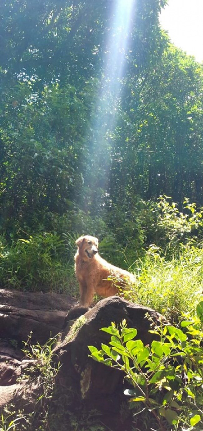 a dog sitting in the suns ray